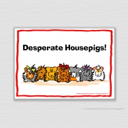 Desperate Housepigs